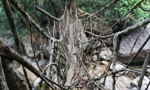 Crossing-Root-Bridge-1020x610
